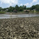 July: Oyster reef research in Shallotte, NC